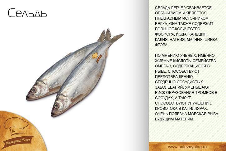 Путассу - польза и вред: где водится рыба, противопоказания, калорийность, как готовят