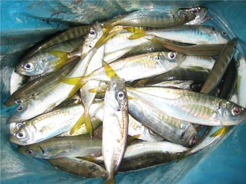 Что нужно знать о рыбалке в геленджике: ловля на центральном пирсе