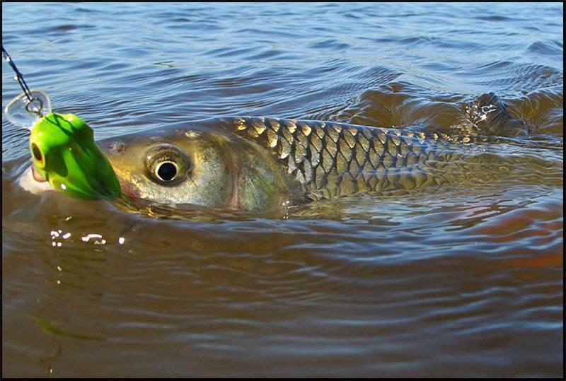 Рыбалка в калининграде и калининградской области