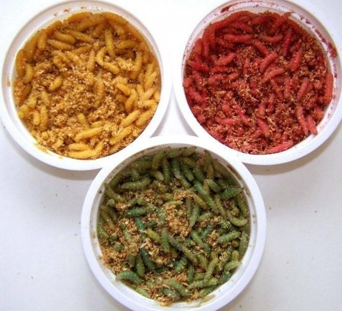 Как покрасить опарыша в красный, желтый или белый цвет в домашних условиях