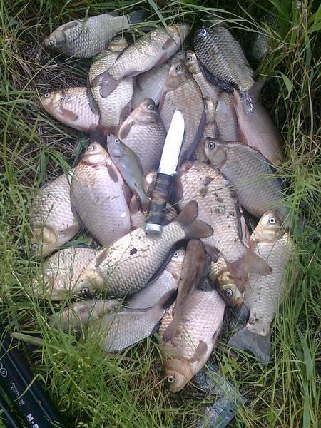 Рыбалка в московской области