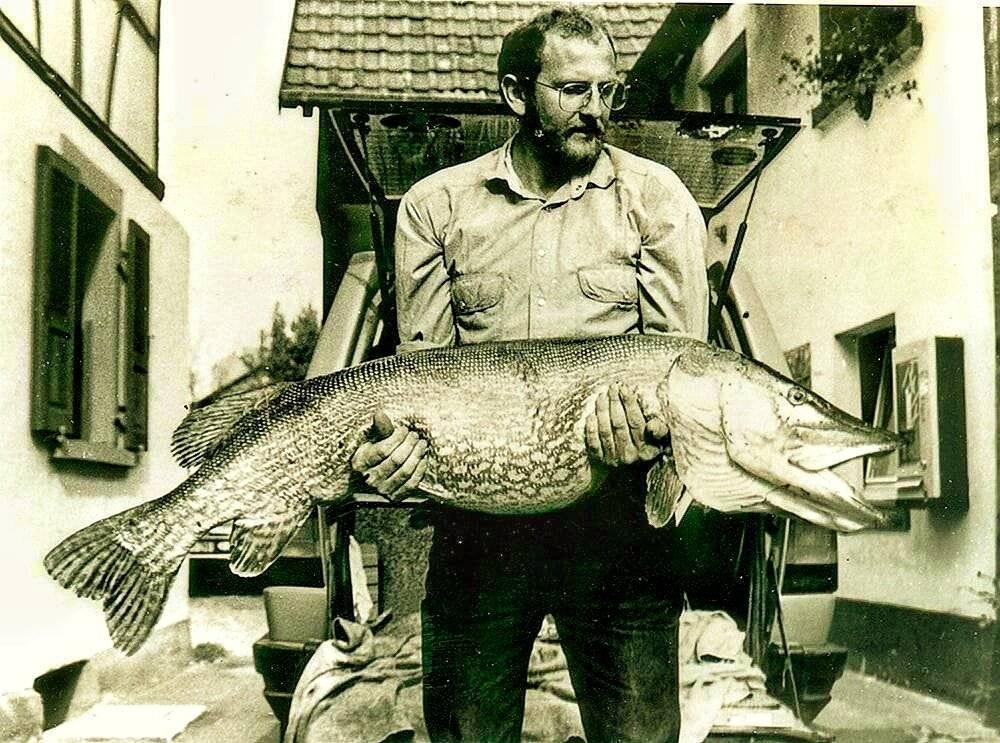 Самая большая щука в мире: народные легенды и научные обоснования существования огромных рыбин