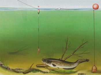 7 лучших способов и наживок для ловли сома – рыбалке.нет