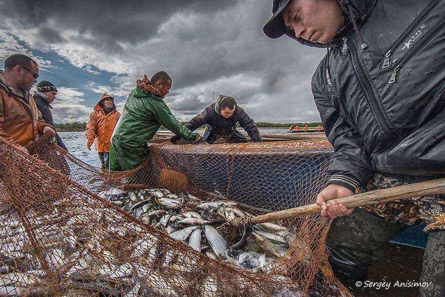 15 лучших рыболовных мест в тамбовской области. платные и бесплатные | животный мир