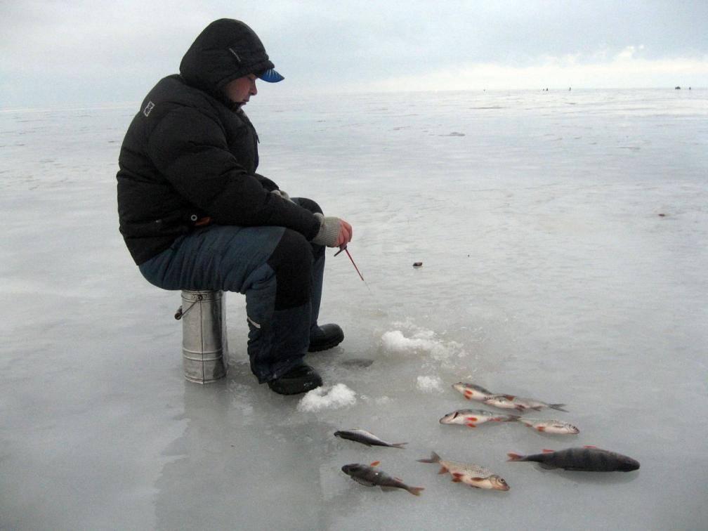 Ловля окуня зимой по перволедью