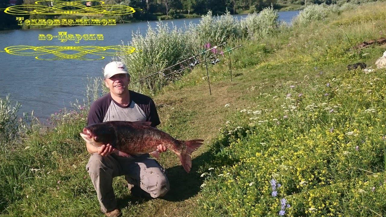 Рыбалка на толстолобика: особенности рыбы и тактика ловли