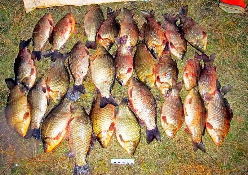 Рыбалка в могилевском районе. рыболовный форум и отчеты