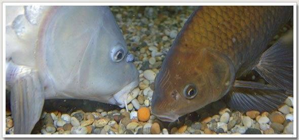 Память у рыбы сколько