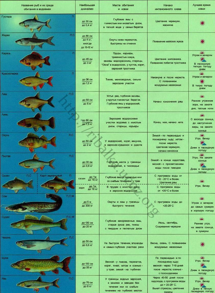 Календарь рыболова на 2020-2021 года по месяцам и дням