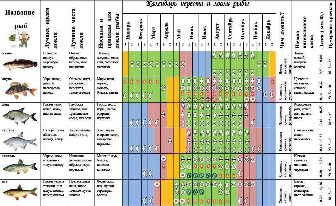 Нерест карпа: сроки и условия для начала, продолжительность икромета