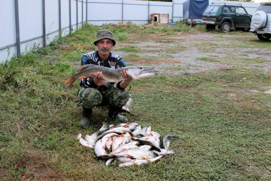 Особенности местной рыбалки. где ловить, и куда делась рыба? | общество | аиф новосибирск