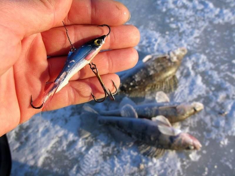 Как ловить судака зимой на балансир: техника и тактика ловли, обзор лучших уловистых балансиров