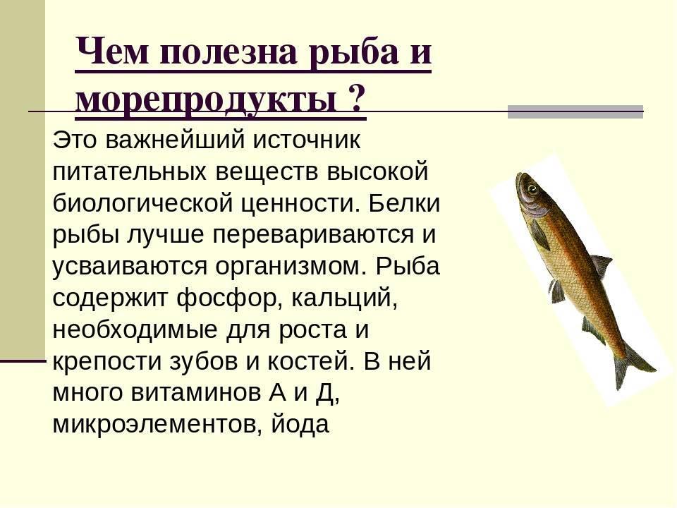 Рыба простипома: где водится, жизненный цикл, рецепты, полезные свойства