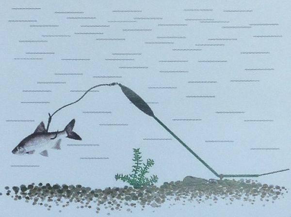 Как поймать сома на донку c берега – 2 варианта и техника ловли