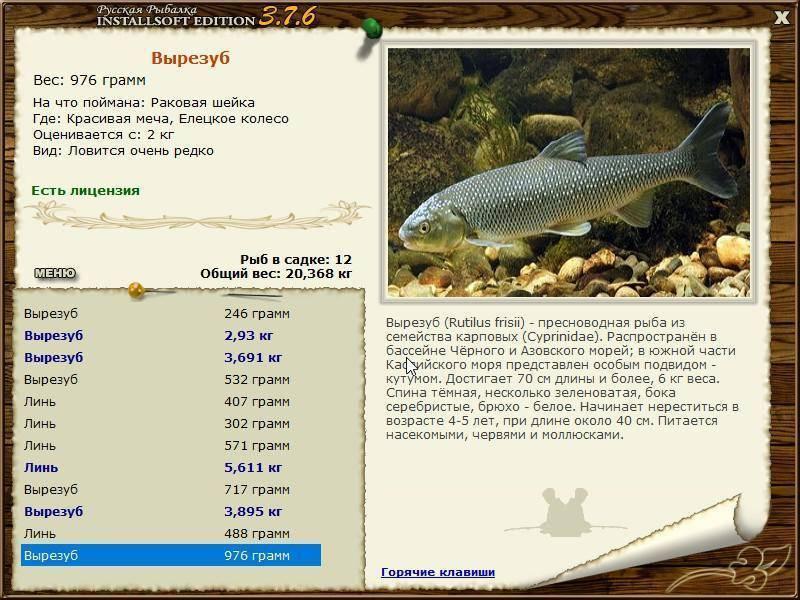 Рыба кутум: фото, где водится и чем питается, как правильно ловить