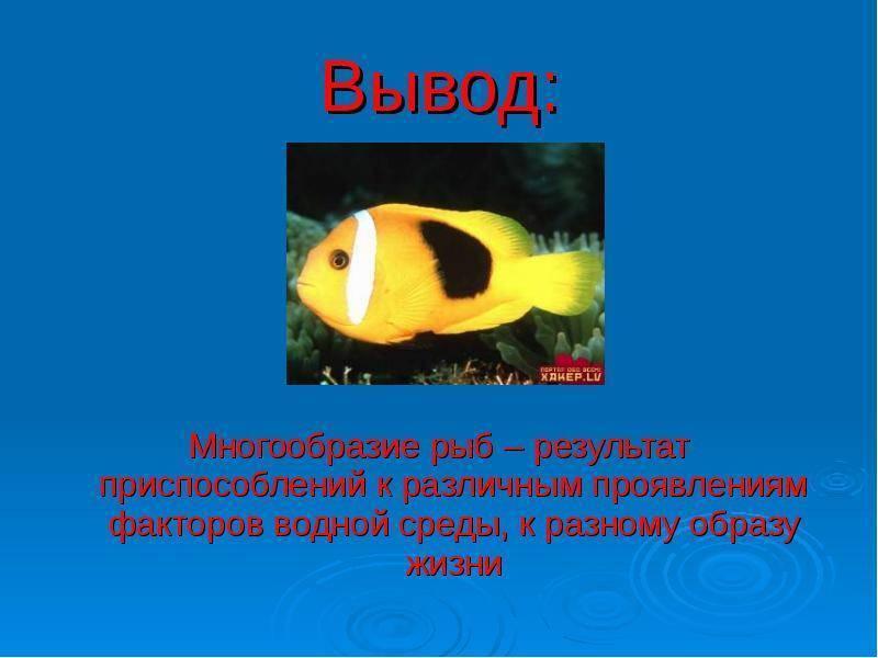 Память у рыбы - сколько и какая памыть у рыбы