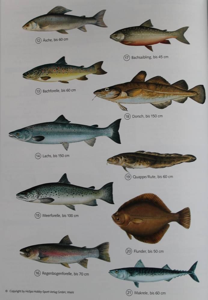 Самые большие речные рыбы в россии – список, размеры, фото и видео  - «как и почему»