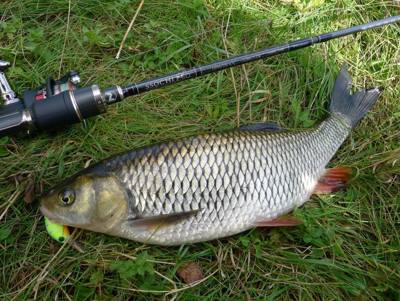 Как подобрать воблер для летней ловли голавля? – рыбалке.нет