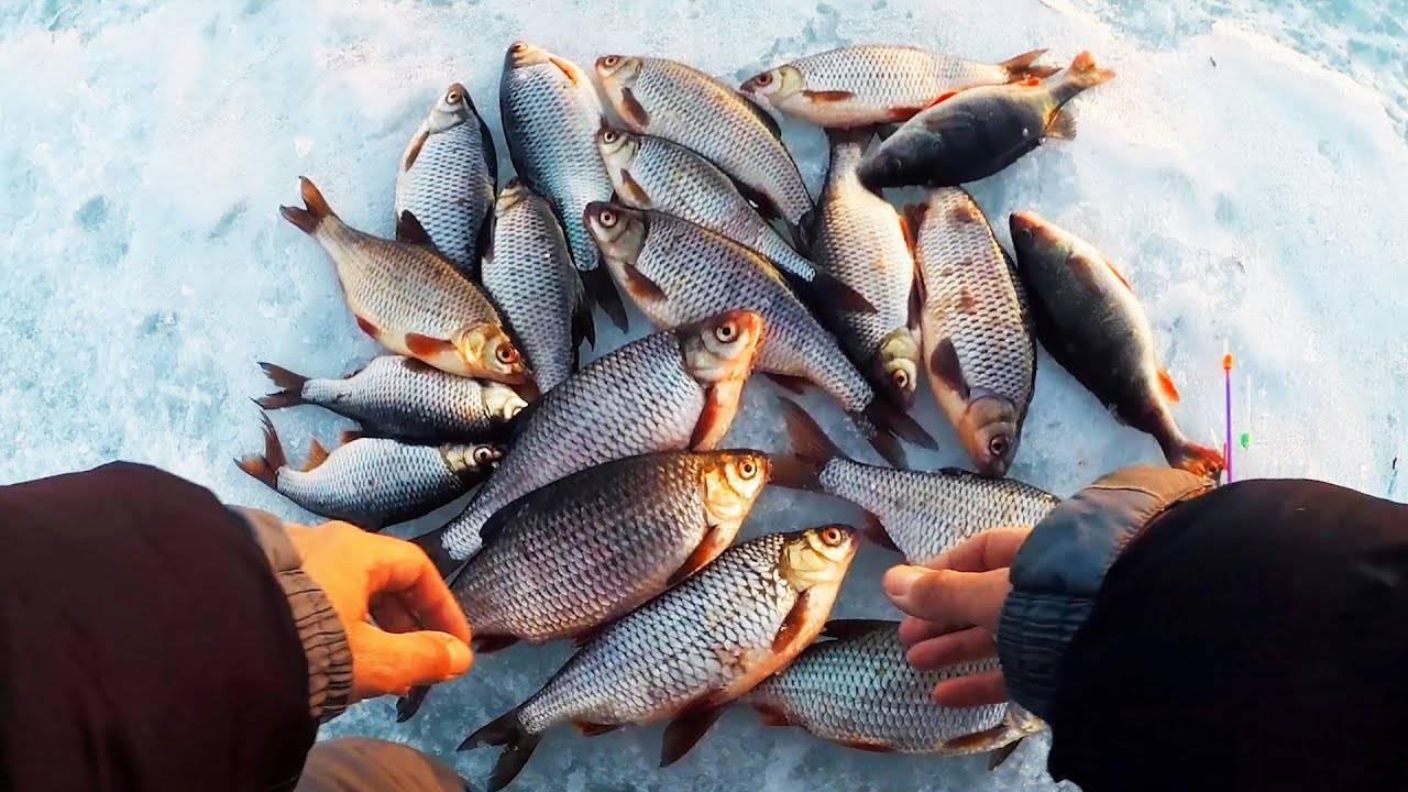 Ловля крупной плотвы - все о рыбалке