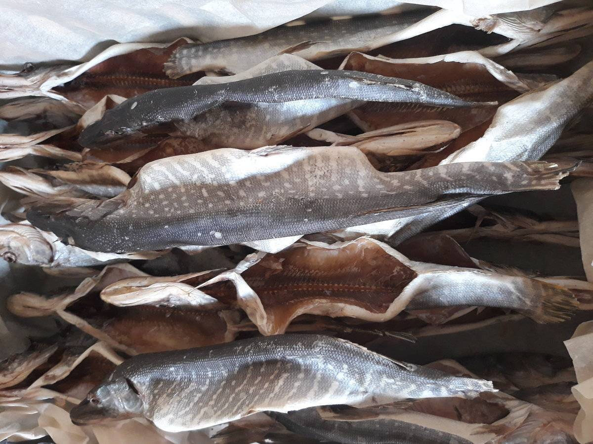 Вяленая плотва: как засолить в домашних условиях, способы вялить, рецепты для сушки