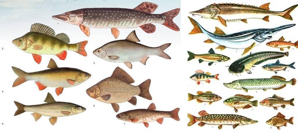 Морские рыбы: список, названия, разновидности