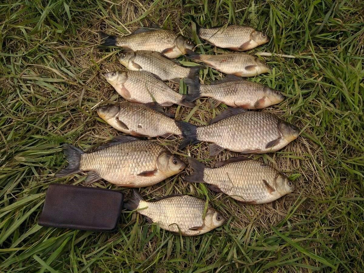 На что ловят карасей - зимняя рыбалка, видео, снасть и наживки