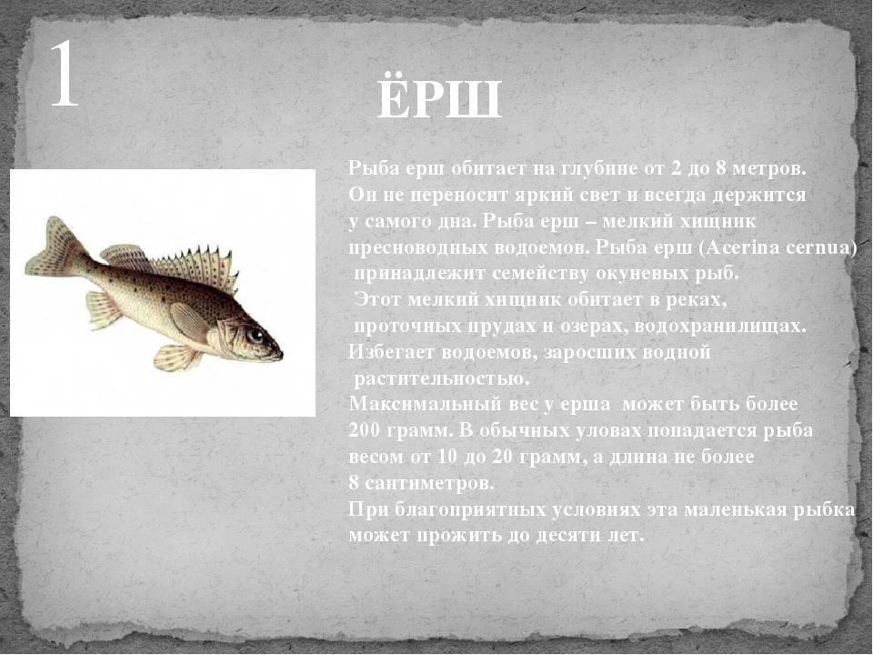 Вкуснейшая рыба российских вод: первая десятка