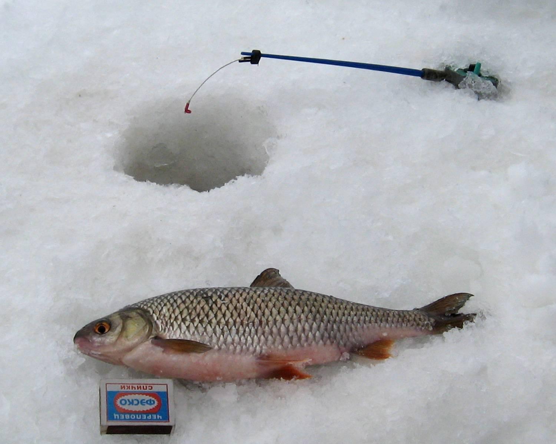 Ловля чебака зимой: на что ловить, какая прикормка нужна