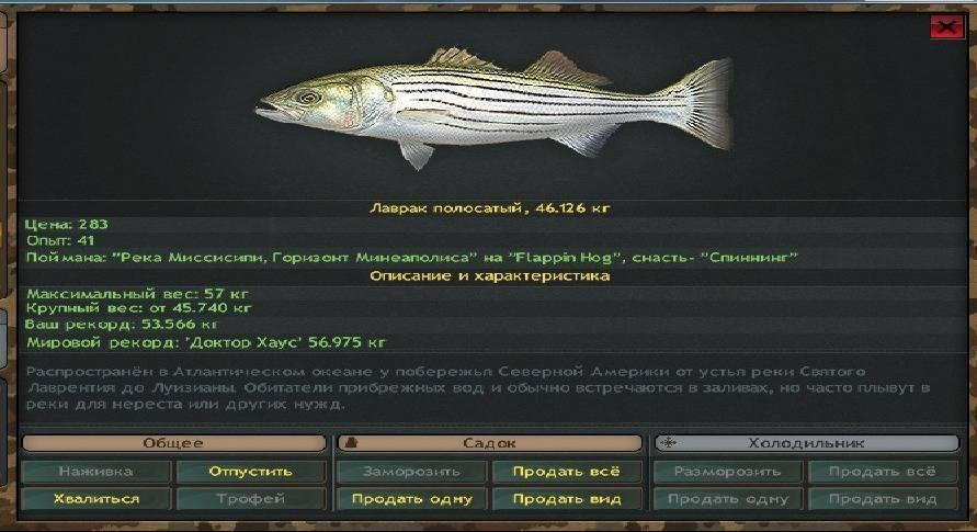 Лаврак — рыба-деликатес: описание, образ жизни, выращивание и рецепты приготовления