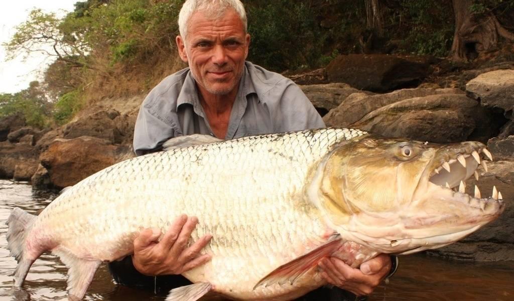 Особенности рыбалки на рыбу голиаф