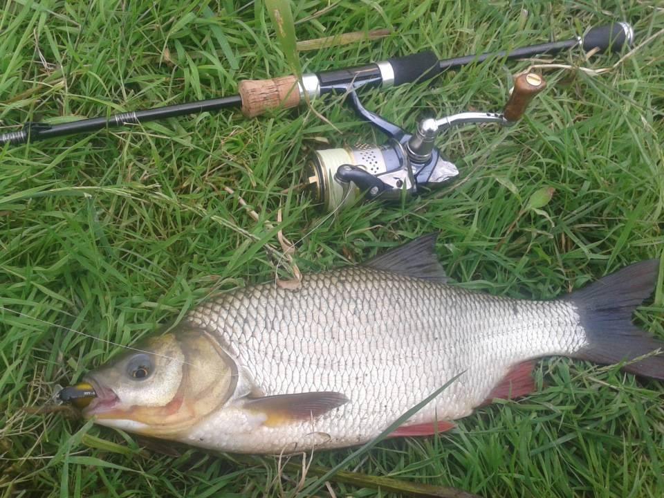 Ловля язя летом - читайте на сatcher.fish