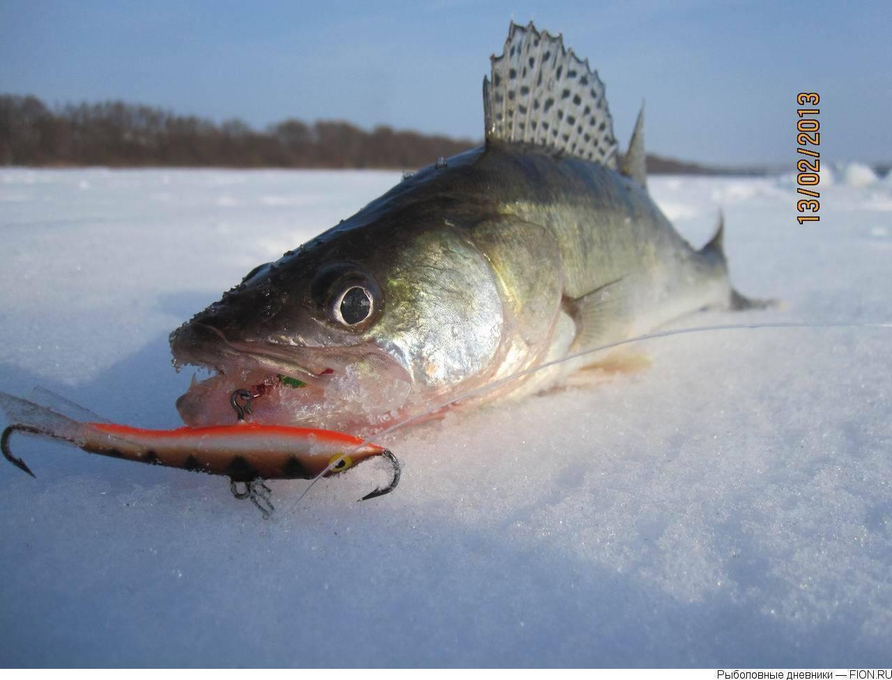 Балансиры на судака зимой: построение снасти, лучшие уловистые балансиры, техника ловли