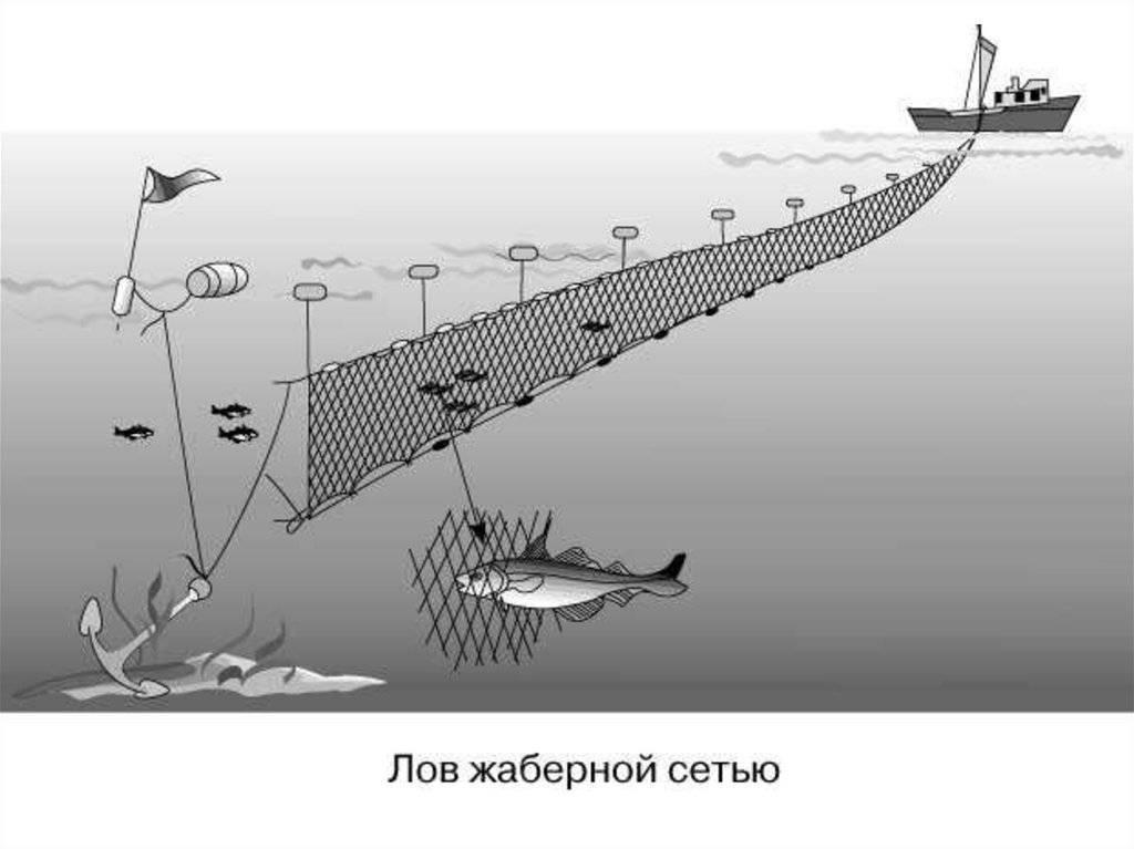 Как ловить рыбу на дорожку?