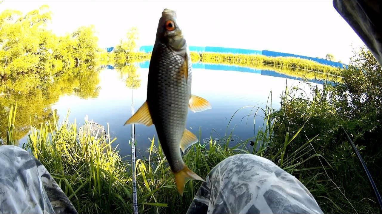 Ловля плотвы весной на поплавок - снасти, тактика и тонкости - на рыбалке!