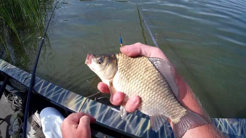 Рыбалка на карася: способы, тактика и снасти