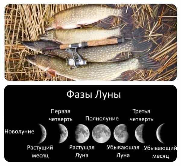 Лунный календарь рыболова и клева рыбы на 2020 год: таблица. когда лучше ловить рыбу по лунному календарю в 2020 году: благоприятные и неблагоприятные дни
