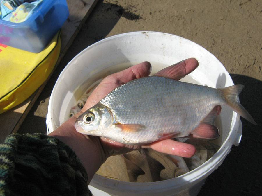 Особенности ловли на фидер весной – тактика, поиск рыбы и снасти
