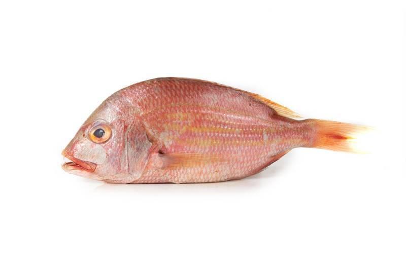 Рыба зубатка: польза и вред для организма человека, применение в лечебных целях и кулинарии