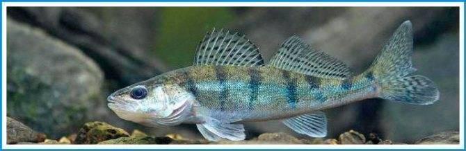 Тарпон рыба: ловля и фото рыбалки на тарпона