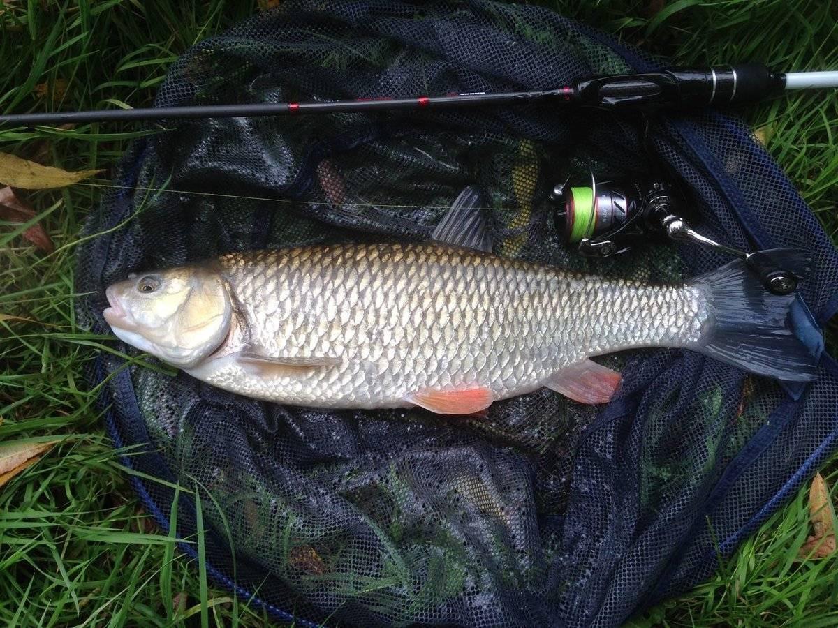Рыбалка в мордовии, где порыбачить в мордовии?