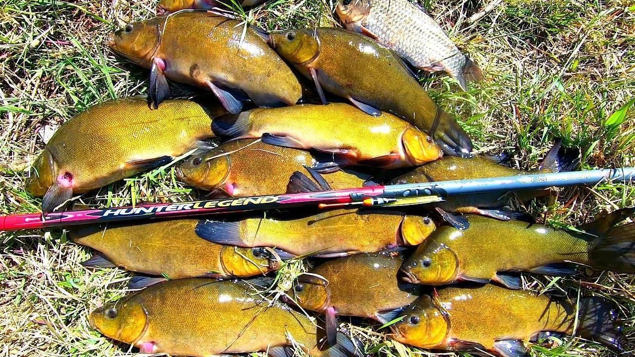 Как правильно устроить оснастку поплавочной удочки для ловли линя.