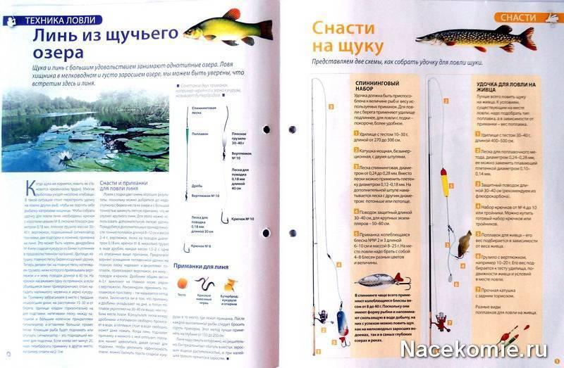 Рыбацкие хитрости: секреты успешной рыбалки