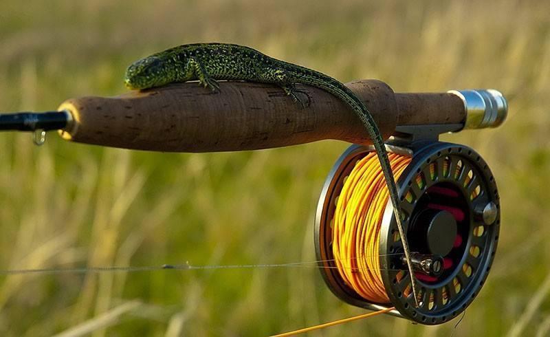 Рыбалка нахлыстом, основы нахлыстовой ловли для начинающих