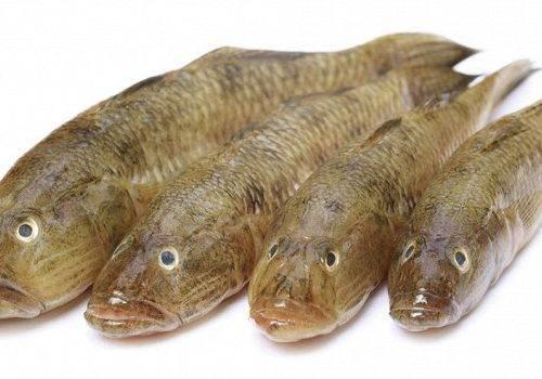 Бычок - реликтовая рыба