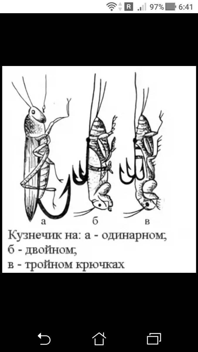 Как ловить голавля на спиннинг?
