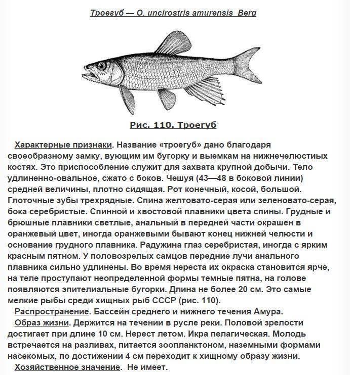 Родостомус - красная тетра: содержание, совместимость, разведение, фото. | аквариумные рыбки