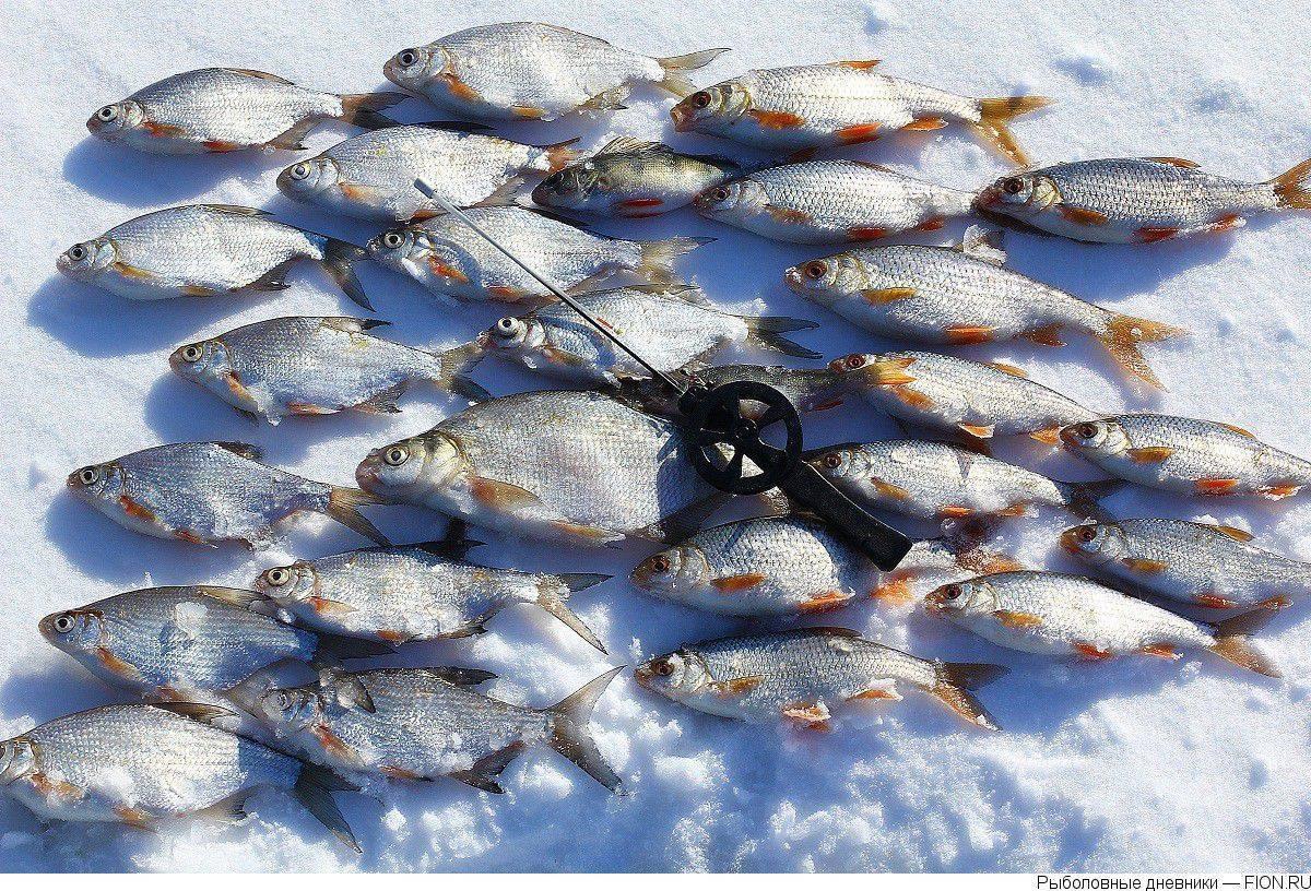 ᐉ яуза - место для рыбака - ✅ ribalka-snasti.ru