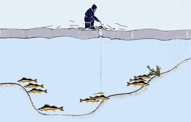 Ловля судака ночью со льда и берега