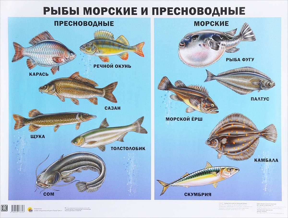 Многообразие разновидностей морских рыб: большие и мелкие, съедобные и промысловые