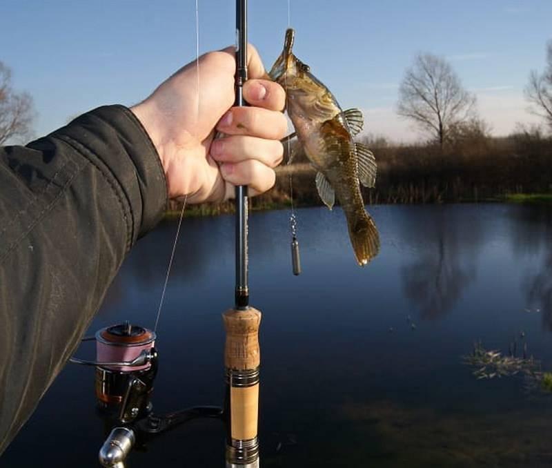 Ловля ротана зимой: выбор снастей и техника ловли